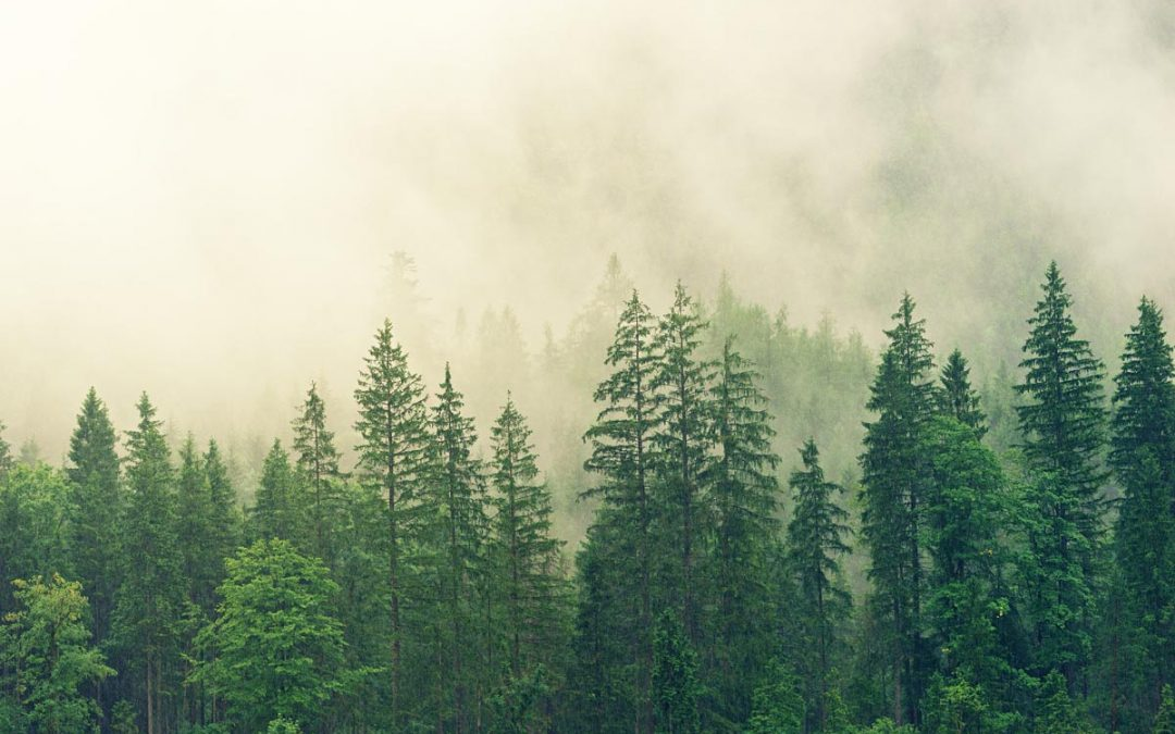 Der Rohstoff Holz in Deutschland