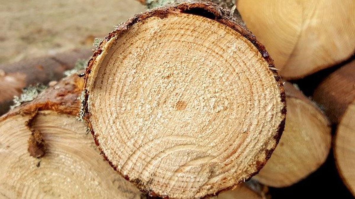 Situation auf dem Holzmarkt – Warum die Holzpackmittelindustrie mit stark steigenden Holzpreisen kämpft